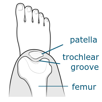 trochlear groove of the femur