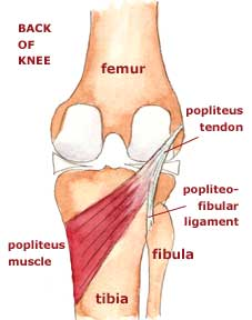 popliteal region of the knee