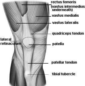 quads muscles