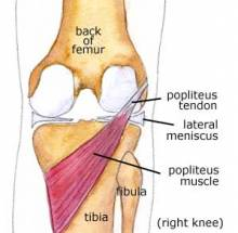 popliteus muscle at the back of the knee