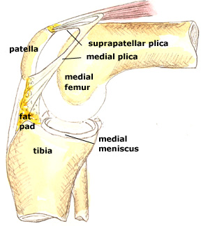 Illustration of medial plica
