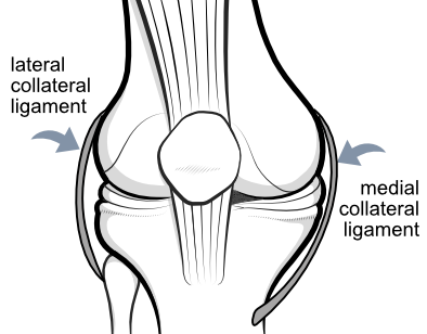 medial and lateral collateral ligaments