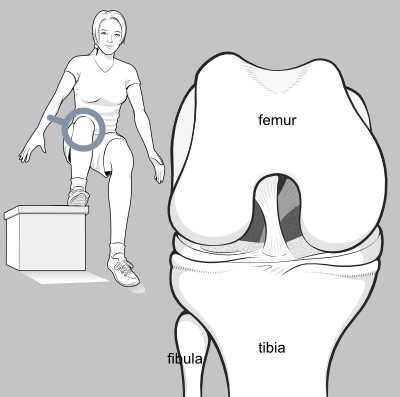 front of the knee with femur, tibia and fibula