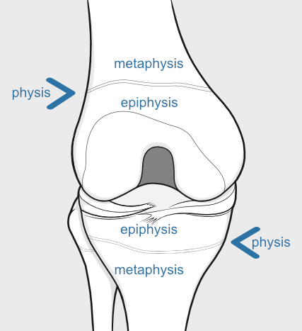 growth plate or physis