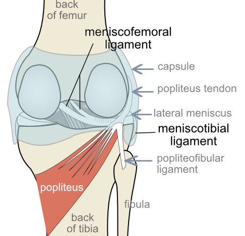menisco-femoral ligaments of the posterolateral corner